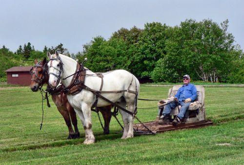 horses pull transportation