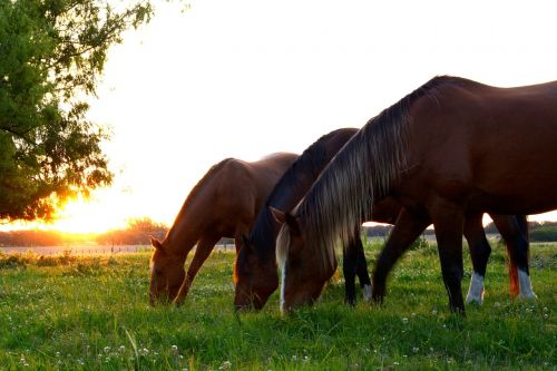horses horse group horses