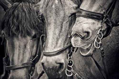 horses horse heads animals