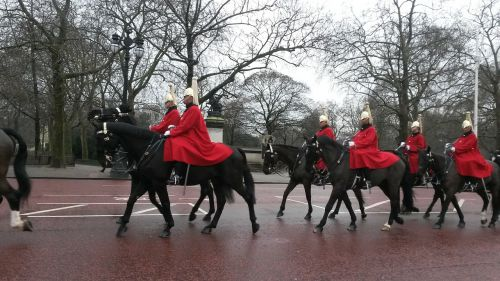 horses guard military
