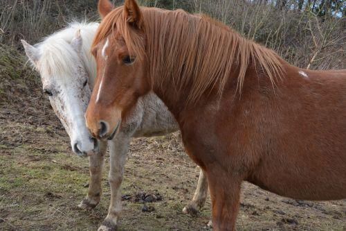 horses mares horseback riding