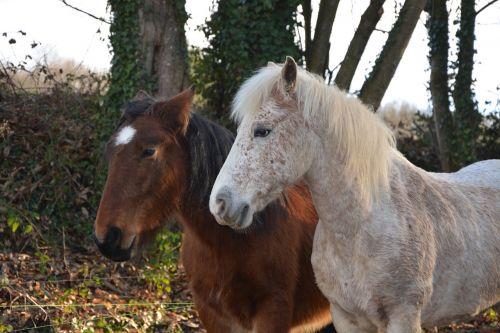 horses equines gelding