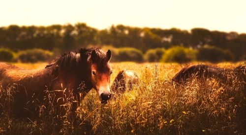 horses animals panorama