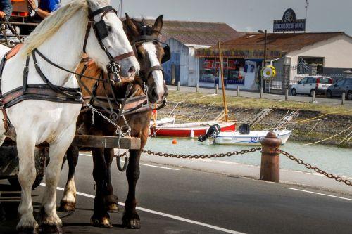 horses horse hitch