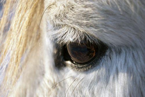 horses eyes animals