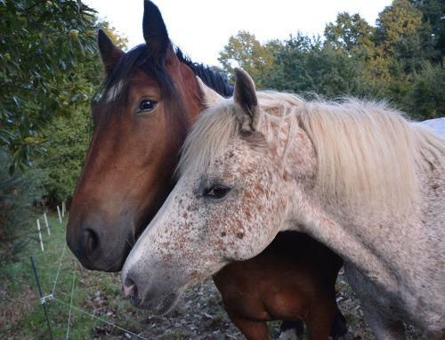 horses complicity hug