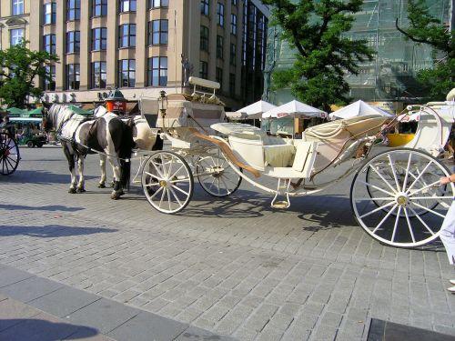 horses transport krakow
