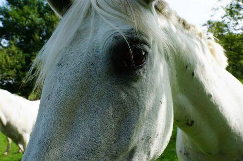 horses mold eye