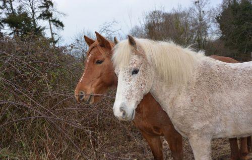 horses horse heads horses