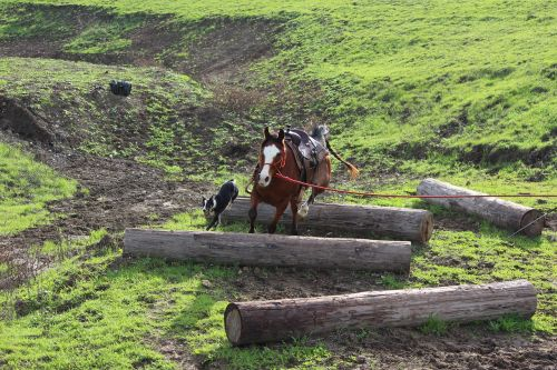 horses dogs groundwork