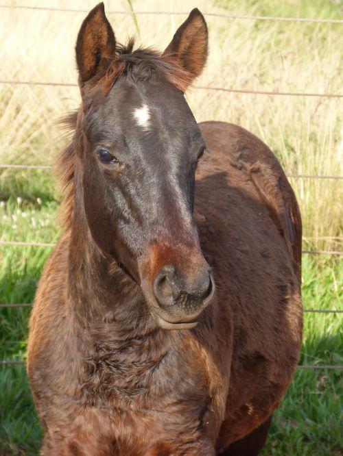 horses quarter mile equine