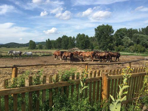 horses farm salföld