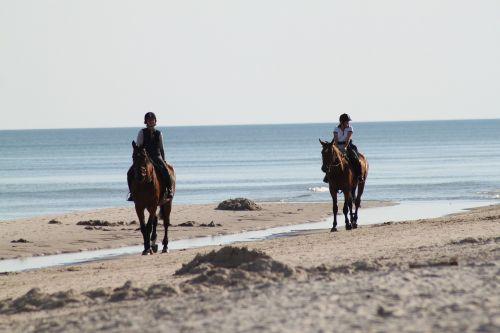 horses horse horseback riding