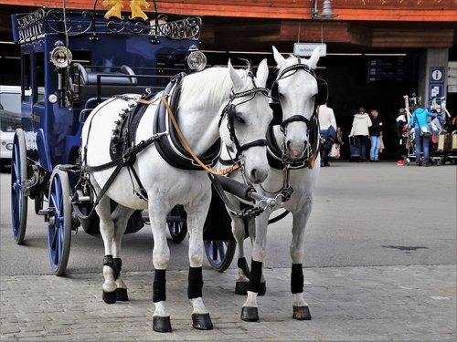 horses  para  two