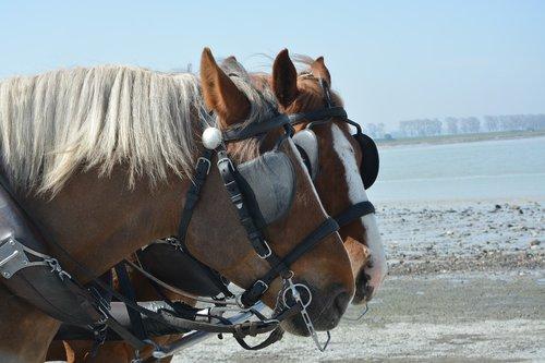 horses  horses yoked  conduct