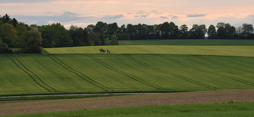 horses  land  pasture
