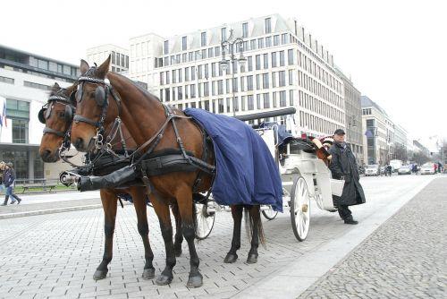 horses carrozza romantic