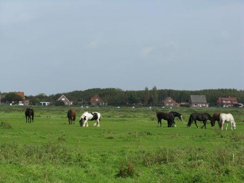 horses pasture palomino
