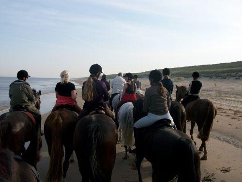 horses beach beach ride