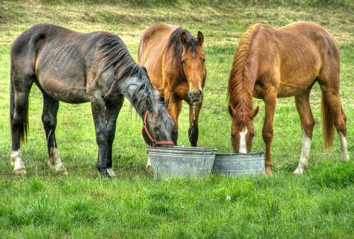 horses  meadow  potions