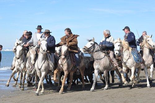horses  sea  guards