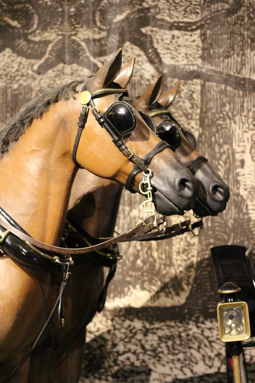 horses  hitch  travel