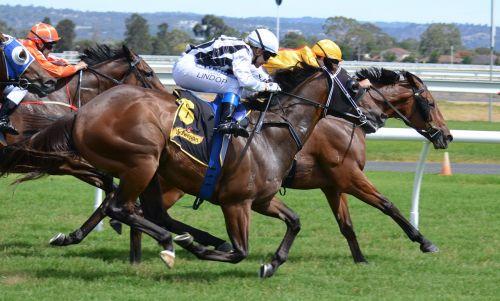 horses racing jockey