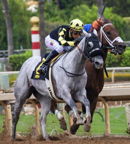 horses  race  horse racing