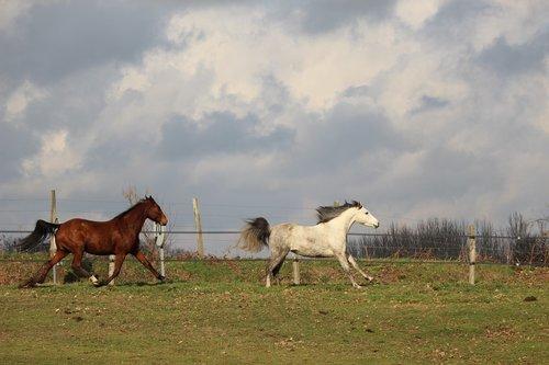 horses  horse  animals
