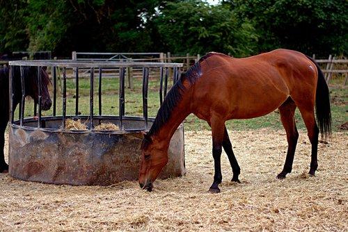 horses  field  mammal