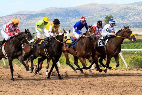 horses  racing  wyoming