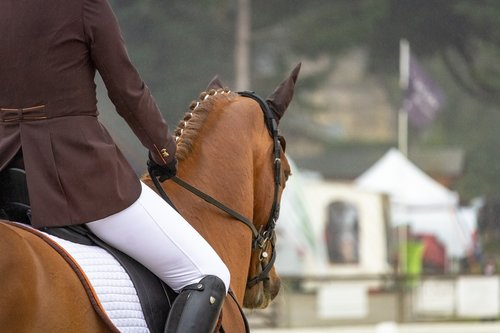 horses  horse  nature