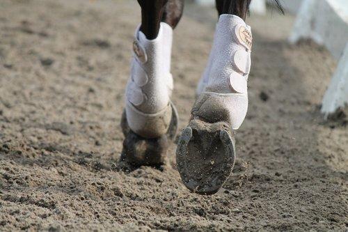 horses  need  rijbak