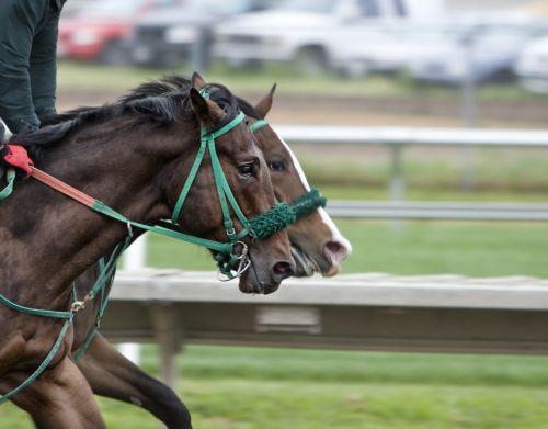 arkliai,trasa,lenktynės,žirgų lenktynės,hipodromas,lenktynių trasa,lenktynės,užliejamos pievos,jodinėjimas,racetrack,raitelis,Sportas,arklys