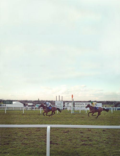 horses bet horseracing