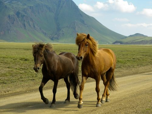 arkliai,iceland,landmannalaugar