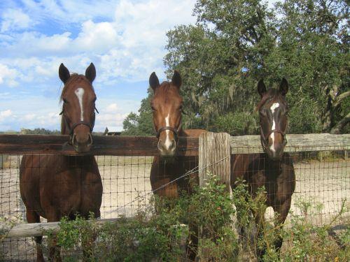 horses farm fence