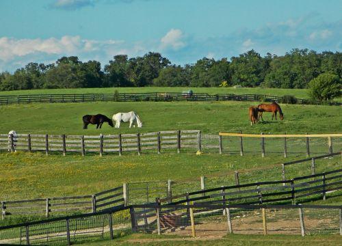 horses farm field