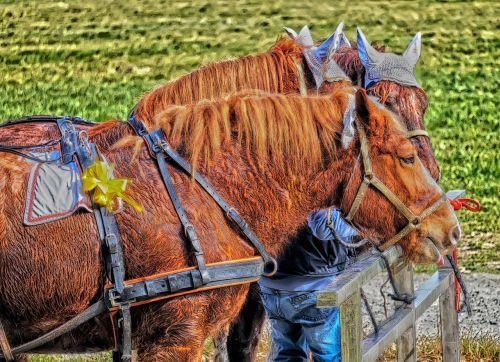 horses horse sweat