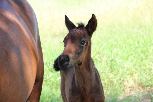 horses potranco colt