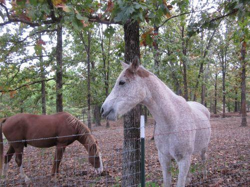 horses nature equestrian