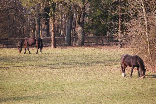 horses coupling pasture