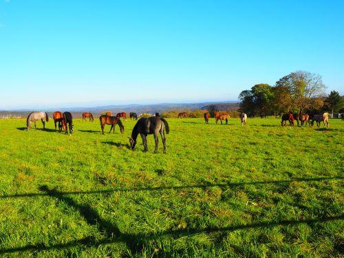 horses pasture pasture land