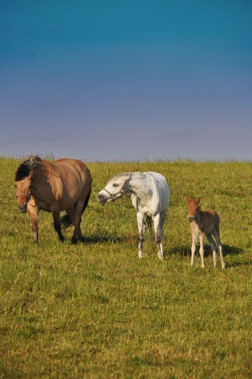 horses family offspring