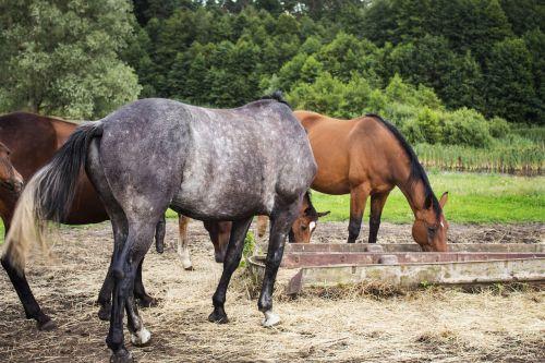 horses herd oats