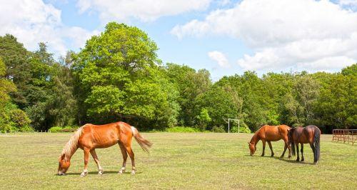 horses pony ponies