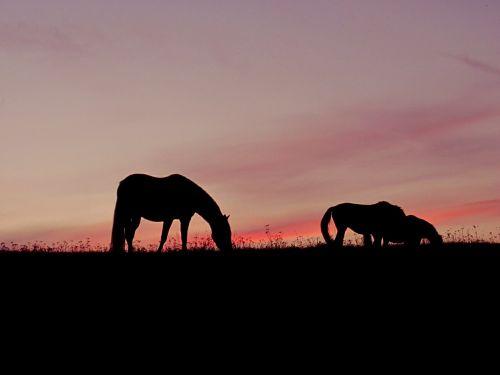 horses sunset pink