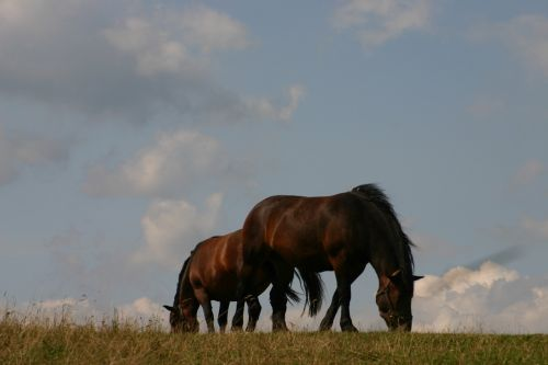 horses meadow pasture land