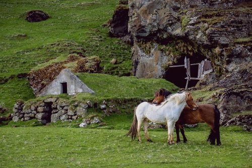 horses pasture farm