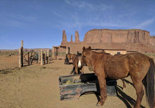 arklys, arkliai, jodinėjimas, lauke, dykuma, gyvūnas, važiuoti, Jodinėjimas, Arizona, paminklas & nbsp, slėnis, valgymas, arkliai paminklo slėnyje, Arizona
